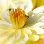 Como atraer aves y abejas a tu jardín