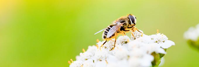 Atraer abejas a jardin