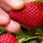 10 Consejos para Mantener su jardin