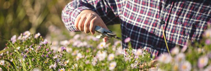 Consejos para Mantener su jardin