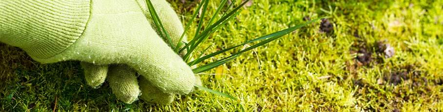 Eliminando malas hierbas