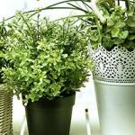plantas que más filtran el aire