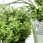 5 plantas de interior que ayudan a filtrar el aire en el hogar